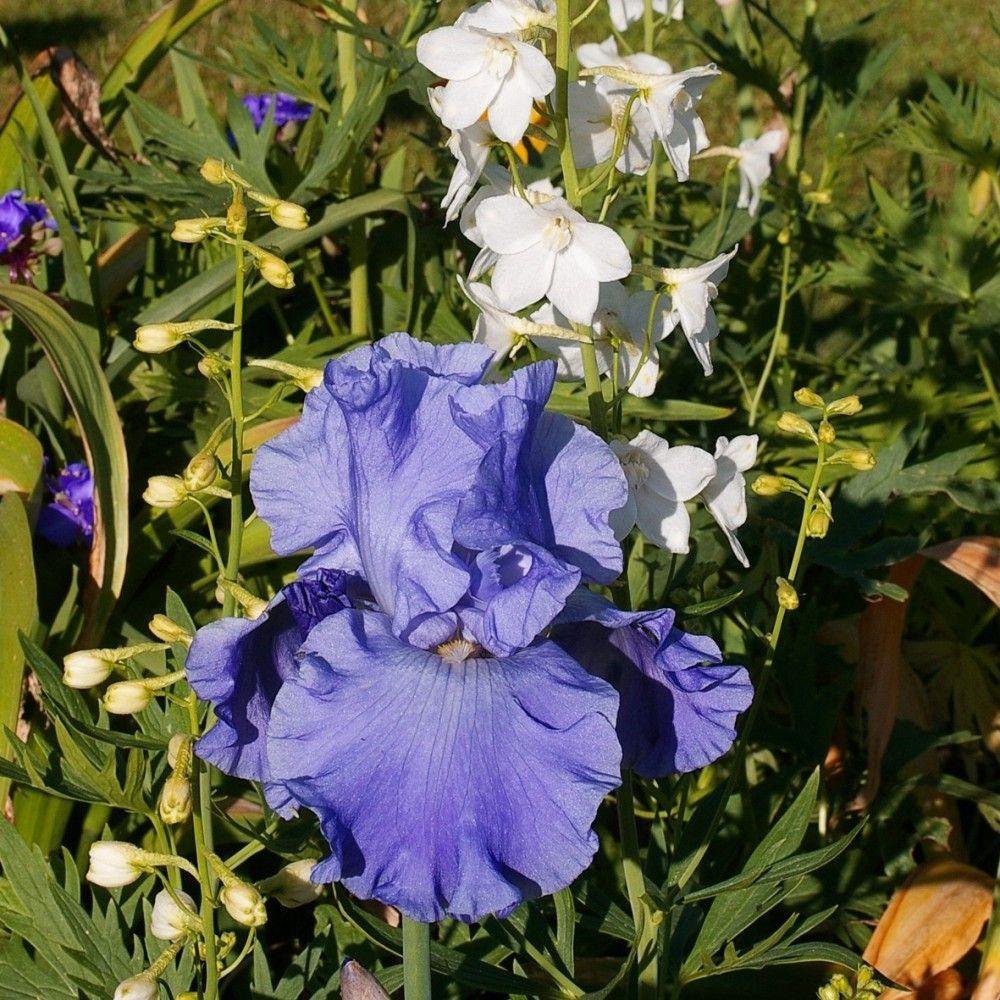 """Selezione """"Bouquet Frais"""""""