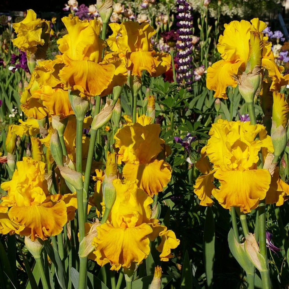 Sélection Bouquet Chaud