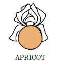 abricot-en.jpg
