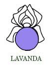 lavande-it.jpg
